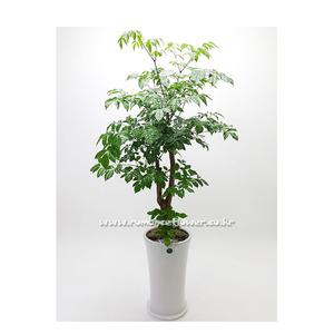 행복나무 1호(해피트리)